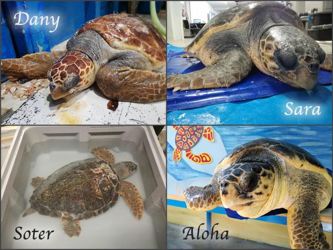 Immagine con le foto delle tartarughe