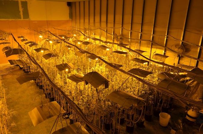 foto dell'interno del capannone adibito alla coltivazione indoor della cannabis